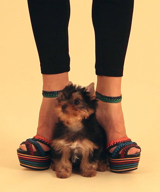 Watch Cute Puppies Show Off Spring's Hottest Shoes