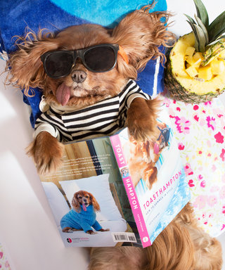 Everything You Need to Know About Instagram Star Toast the Dog's New Coffee-Table Book