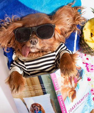 Toast the Dog Sunning in the Hamptons Is Giving Us Major Wanderlust