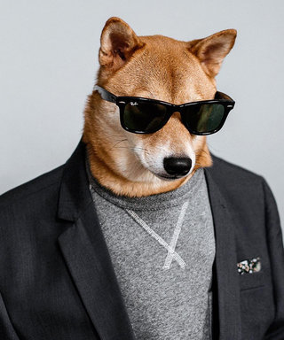 Woof! Meet Menswear Dog, Instagram's Most Stylish Canine