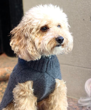 12 Dog Clothing Brands That'll Have Your Pup Winning Best Dressed
