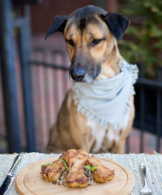 9 Restaurants with Special Menus for Your Dog (Yes, Your Dog)
