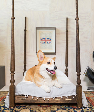 Home Tour: A Doggone Good-Looking Bachelor Pad