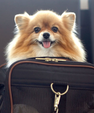 3 Pet Air Travel Tips for Making a Flight with Your Pet Safe and Easy