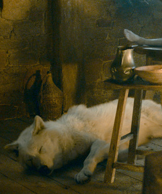 Game of Thrones's Beloved White Wolf Has Died