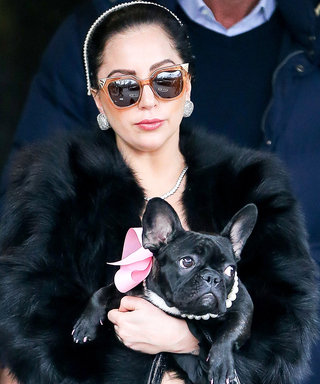 15 Times Celebrity Dogs Dressed Better Than You Do