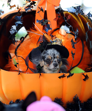 10 Adorable Howl-oween Costumes for Your Dog
