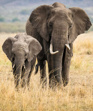 Tiffany & Co. Pledges Continued Support to Save Elephants