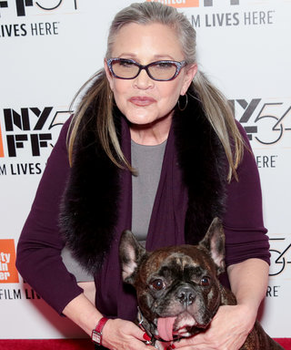 Carrie Fisher's Dog Had an Adorable Reaction to Seeing His Late Mom in Star Wars: The Last Jedi