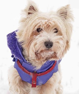 Dog Winter Coats and Other Pet Winter Must-Haves