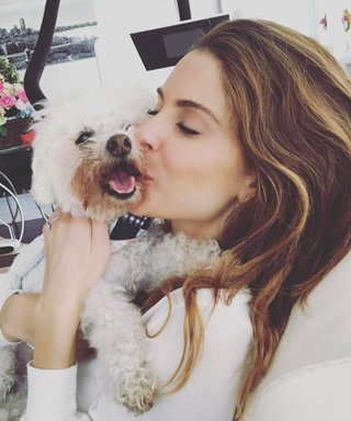 Maria Menounos's 17-Year-Old Dog Died While She Was Away for the Super Bowl