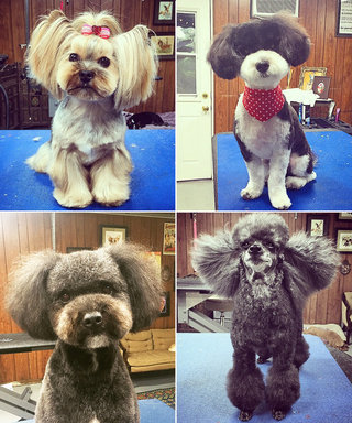 Meet The Groomer Who Is Giving Dogs Beyonce-Level Hair