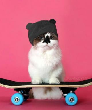What's Right Meow: The Full Scoop on Albert Baby Cat's Ever-Changing Outfits