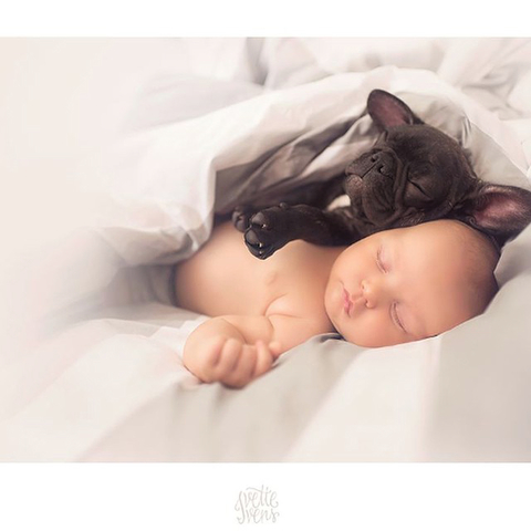 Baby and French Bulldog Embed 1