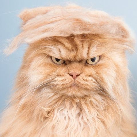 @meetgarfi on @trumpyourcat