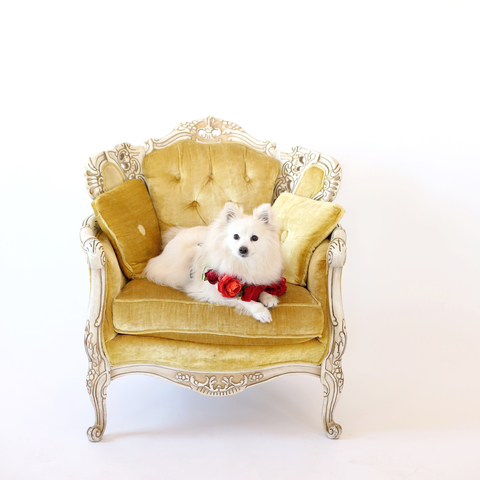 Merrick Pet Food - Picture Ready