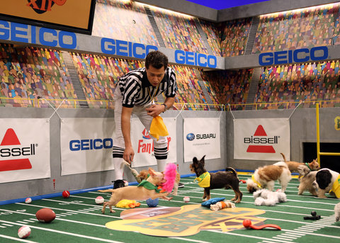 Puppy Bowl XII various production photos from the taping of the event.