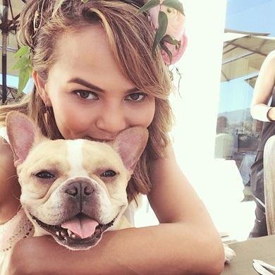 Celebs & Their Famous Dogs (PHOTOS) - Biography