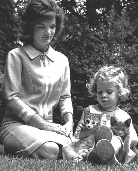 Hollywood's Most Glamorous in Cat Lady Chic