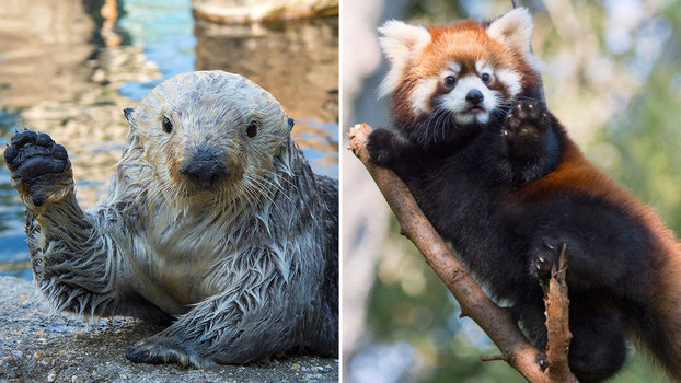 Happy Friday Here Are 10 Zoos Cutest Baby Animals
