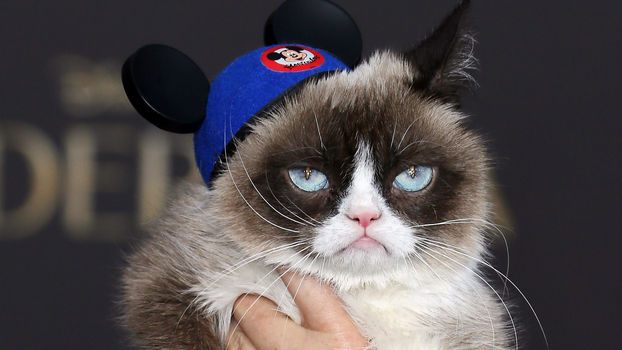 Grumpy Cat attends the premiere of Disney's 'Cinderella' at the El Capitan Theatre on March 1, 2015 in Hollywood, California.