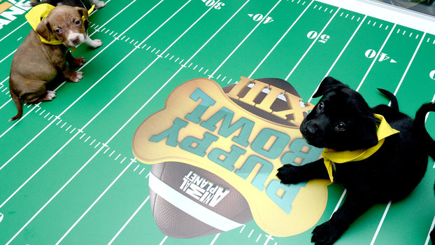 The Puppy Bowl Break