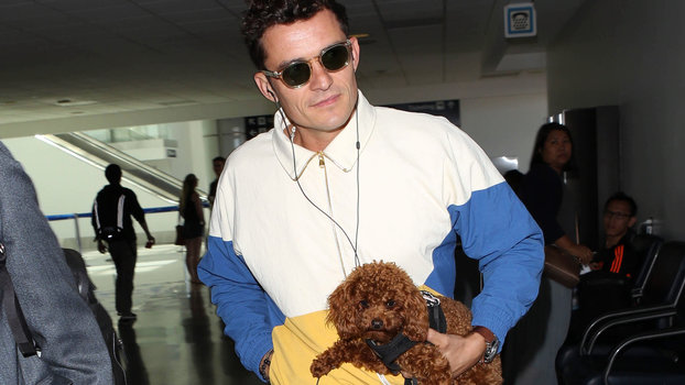 The Difference Between Orlando Blooms And Katy Perrys Dogs Mighty