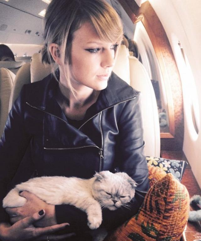Taylor Swift Cat Video
