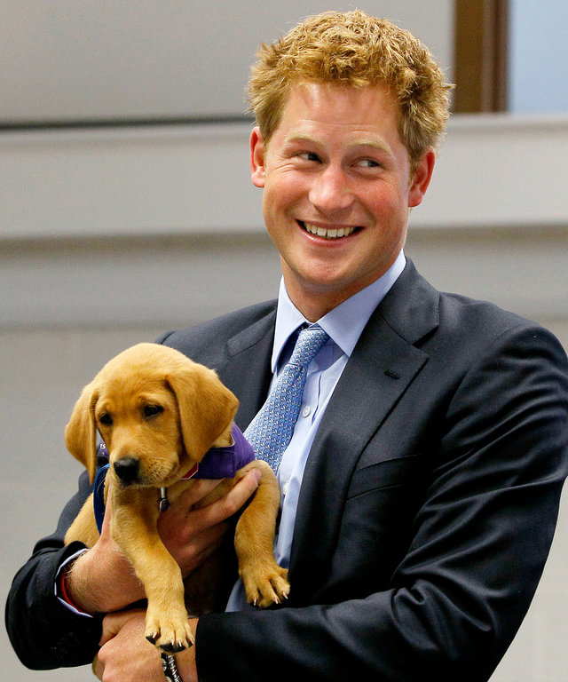 Prince Harry with Dog