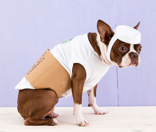 <p><strong>Latte Dog</strong></p>