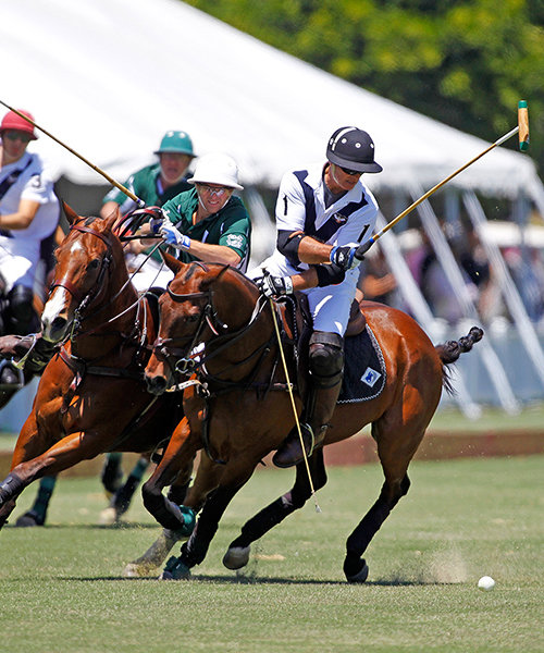 <p>Take in a Polo Match</p>