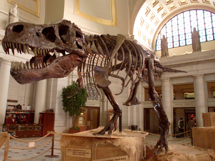 <p>The Latest in Dinosaur news </p>