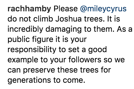 Miley Cyrus tree embed