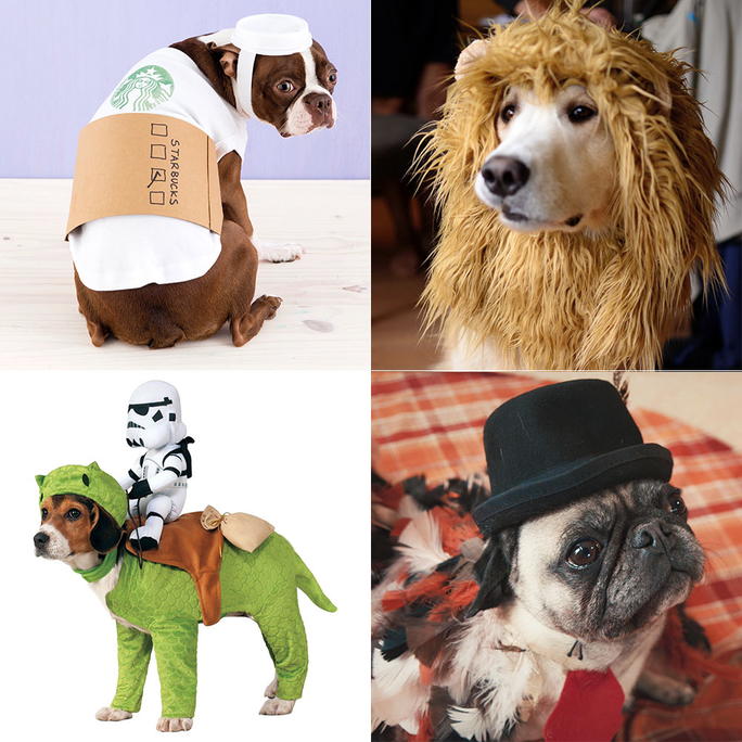 8 Genius Halloween Costume Ideas for Your Dog & Funny Halloween Costumes for Dogs | InStyle.com