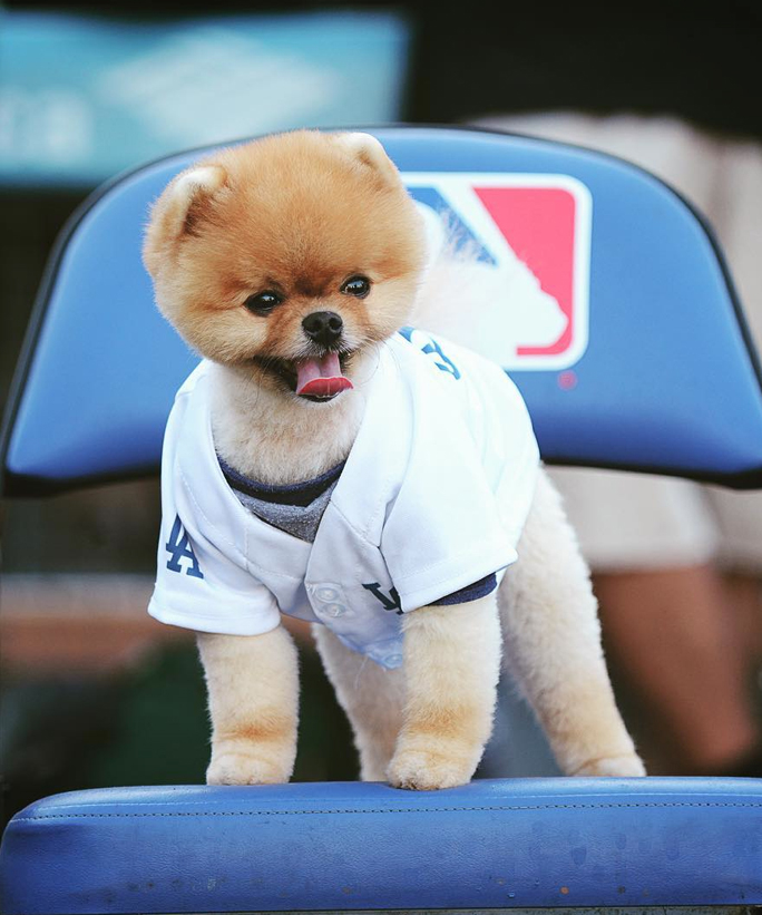 World Series 2015: 10 Celebrities (and One Dog) Who Threw Out the First Pitch This Season