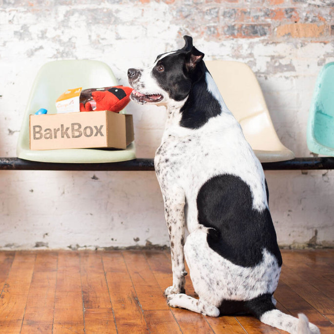 BARK BOX SUBSCRIPTION