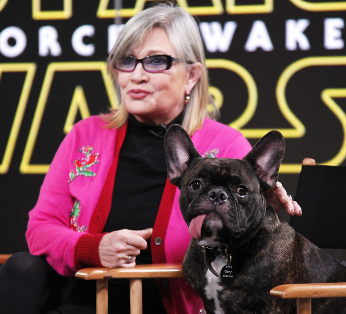 Carrie Fisher Brings Her Adorable Pooch to <em>Good Morning America</em> Interview