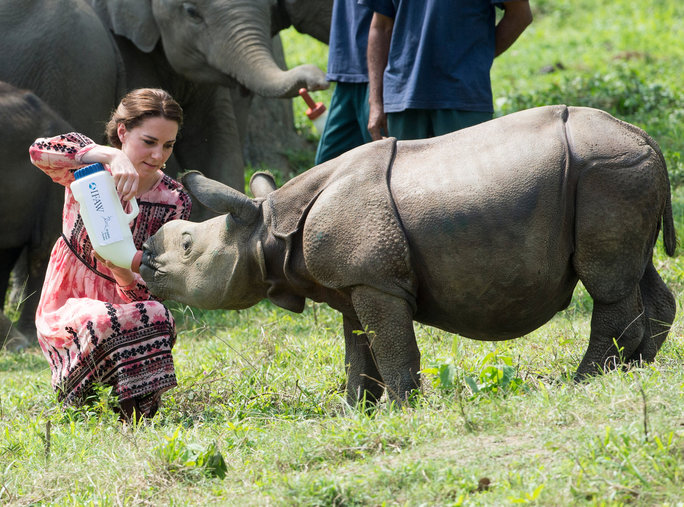 <p>Up close with a baby rhino</p>