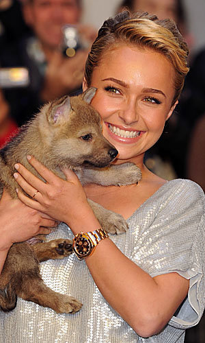 It's puppy love for Hayden Panettiere at the debut screening of Alpha and Omega!