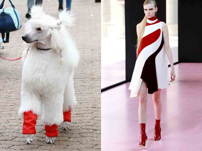 Crufts Vs Paris Fashion Week: Which Is The Most Stylish?