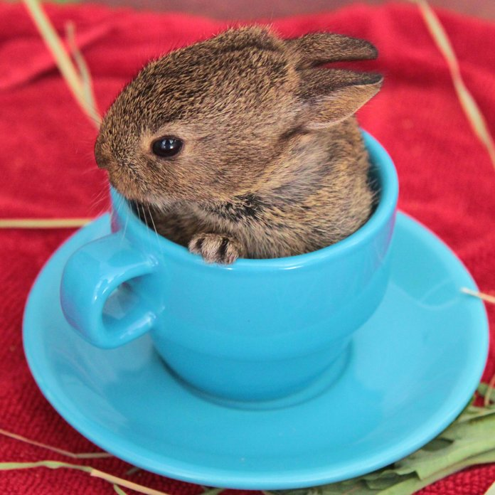 20 Bunny Rabbit Gifs That Totally Sum Up The Easter Bank Holiday Weekend
