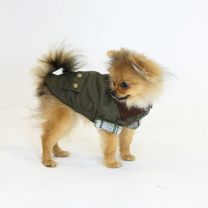 InStyle's Resident Puppy, Michael Jackson The Pom, Showcases His Spring Wardrobe