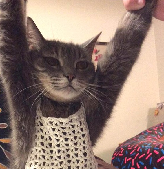 What This Cat Has To Say About Fashion