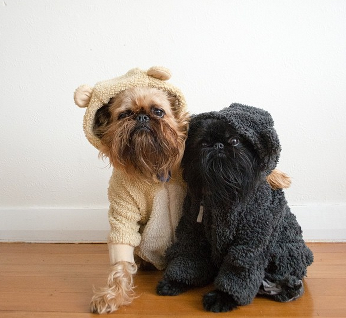 These Dogs Have More Instagram Followers Than You