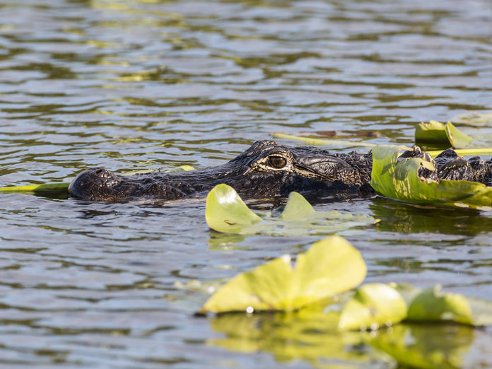 Why Crocodiles Are The Secret To Good Skin