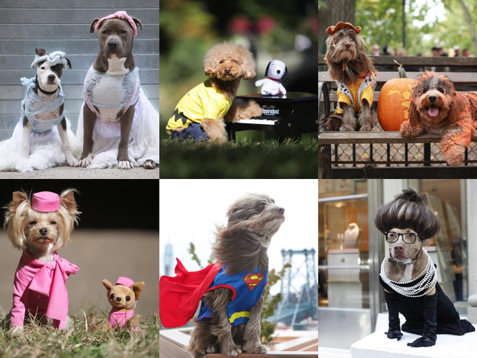 Halloween Dogs Of Instagram Are Now A Thing. And We're Totally In Love...
