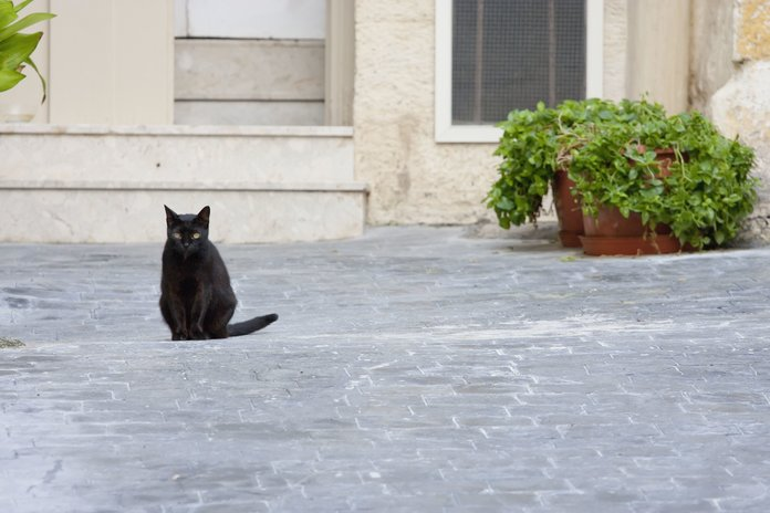 Why Belgians Are Responding To The Terror Threat With Pictures Of Cats