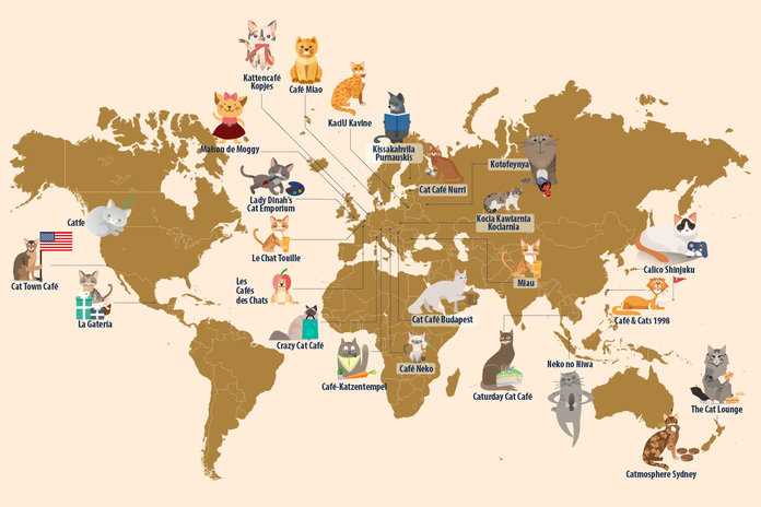 A Comprehensive Map Of The 25 Best Cat Cafes In The World