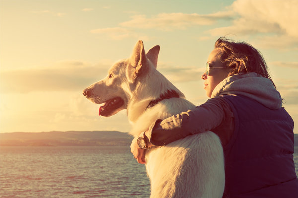 The Do's And Dont's Of Taking Your Pet On Holiday