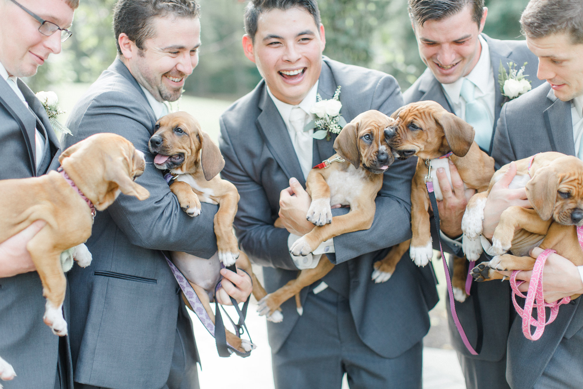 Bridesmaid Puppies 3